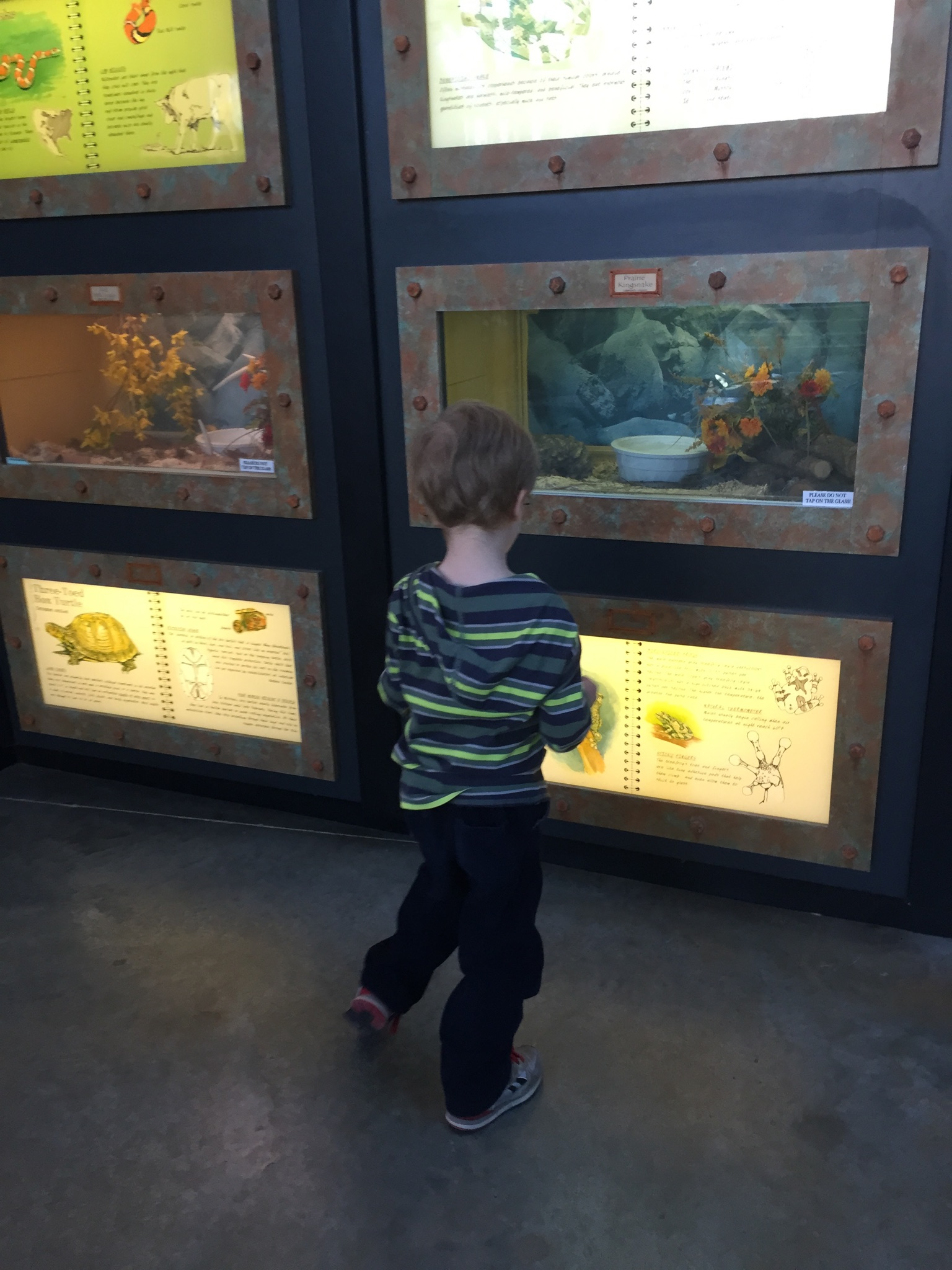 Lakeside Nature center displays