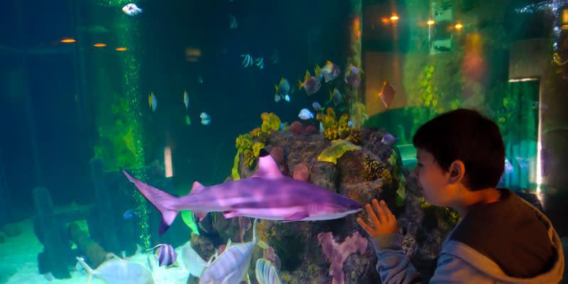 Sea Life Kansas City Aquarium Visit Kc