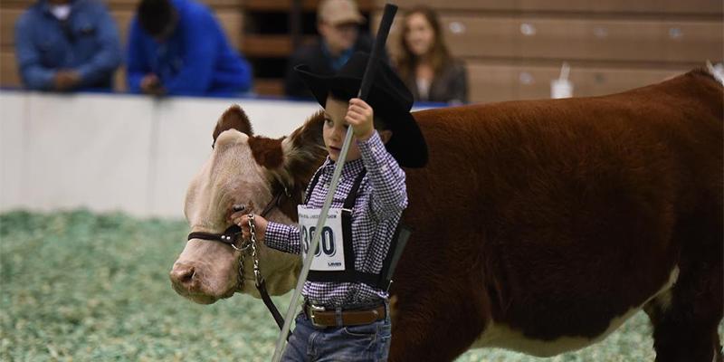American Royal Livestock Show