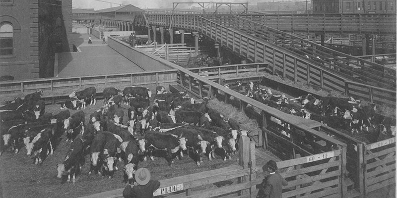 Stockyards in the West Bottoms