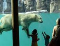 Kansas City Zoo Polar Bear Exhibit