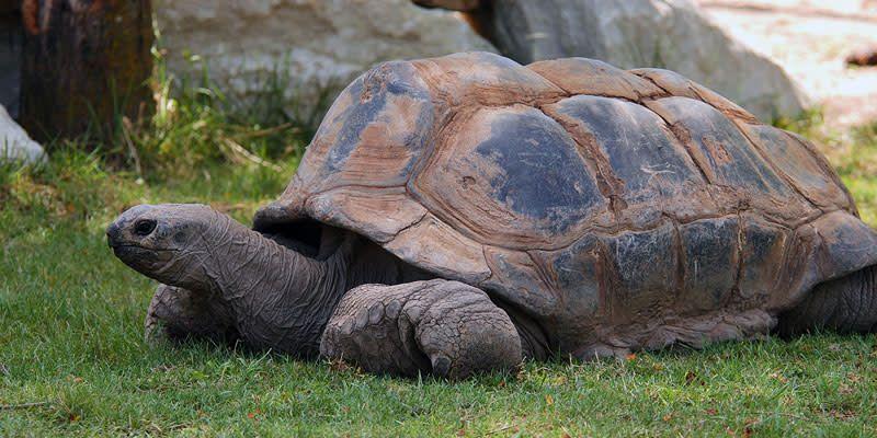 Kansas City Zoo | Visit KC
