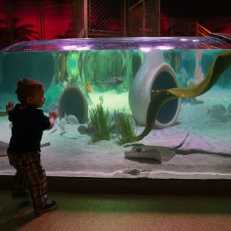 SeaLife Aquarium in Crown Center